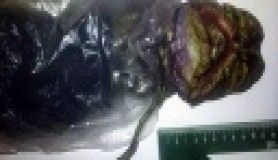 'Uzaylı' cesedini 2 yıl dolapta sakladı
