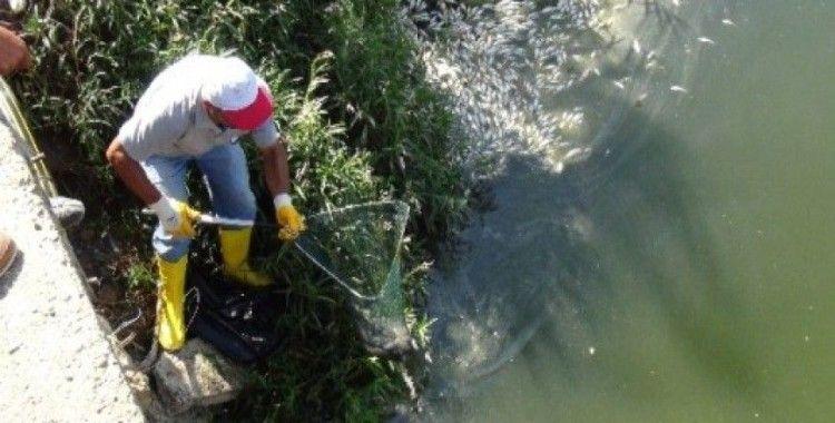 Gazipaşa'da binlerce balık telef oldu