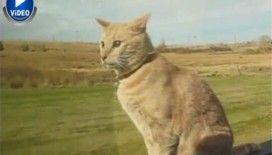 Dünyanın en rahat kedisi