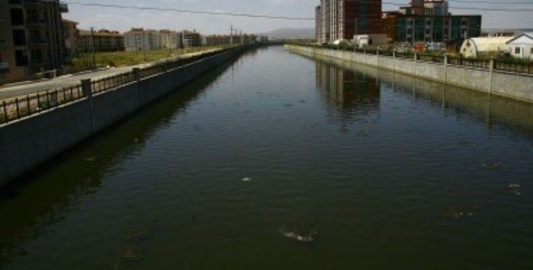 Akarçay'da balık ölümleri