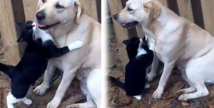 Kediyle köpeğin şaşırtan dostluğu