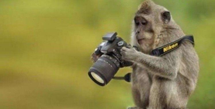 Fotoğrafçılığa gönül veren hayvanlar