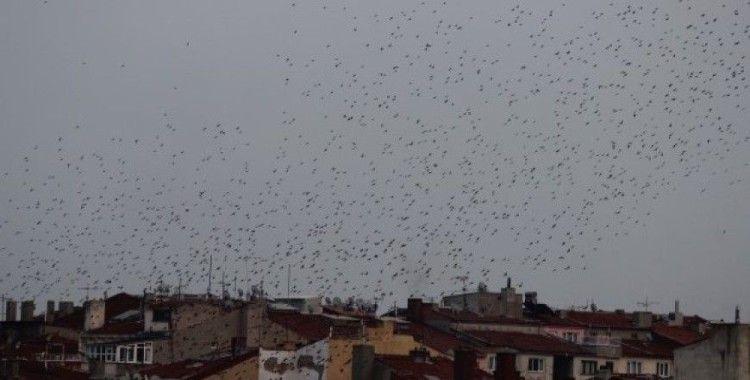 Eskişehir semalarında kuşların dansı büyüledi