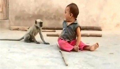 Maymun sadece oynamak istedi ama