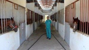 Türkiye'de tek Atlardan panzehir üretiliyor