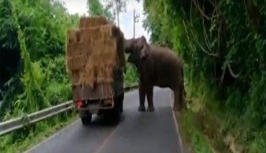 Fil kamyondan sama balyası yürüttü