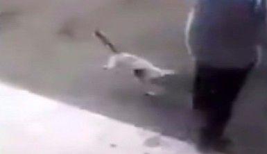 Öfkeli kedi adama böyle saldırdı