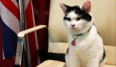 İngiltere ilk diplomat kedisini Ürdün'e atadı