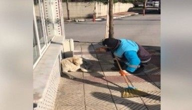 Sokak köpeğine serenat