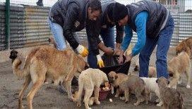 İsrafın önüne geçip sokak hayvanlarını besliyorlar