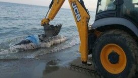 Antalya'da kıyıya balina vurdu