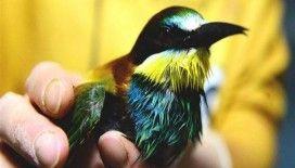 Tedavi edilen arı kuşu ile saksağan doğaya bırakıldı