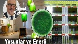 Necmi Özdemir, 'Yosunlar ve Enerji'
