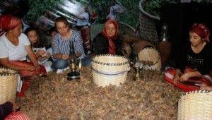 Fındığın başkentinde Fındık Festivali
