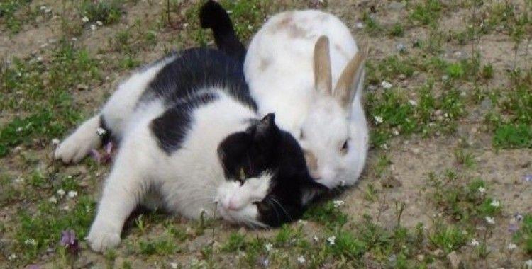 Kedi ve tavşan dostluğu görenleri şaşırtıyor