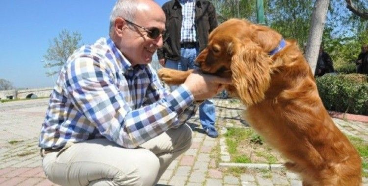 Büyükçekmece'de kedi ve köpeklere özel park
