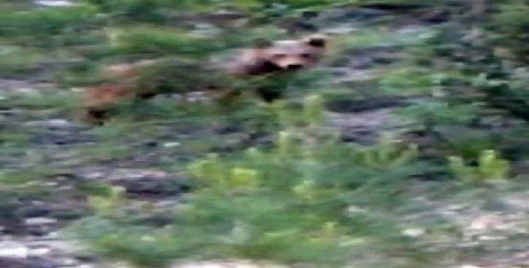 Yol kenarında gördüğü ayıyı 'gel oğlum' diye çağırdı