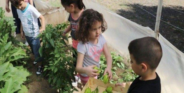 'Çiftlik' okulda 'doğal' eğitim