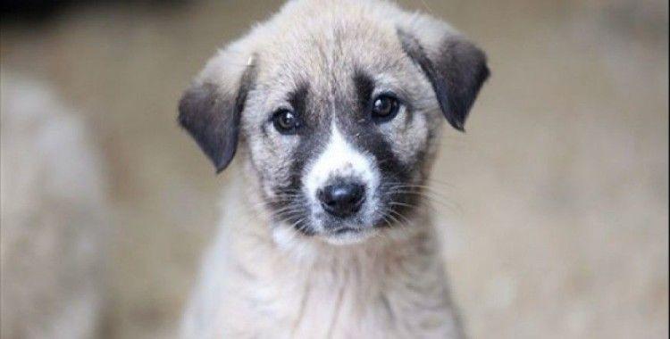 Hayvan Hakları Araştırma Komisyonu, Evcil Hayvancılık İşadamları Derneği'ni dinledi