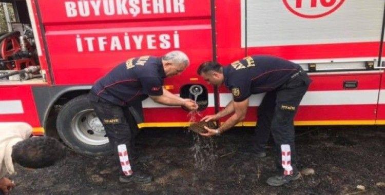İtfaiyeden yangında mahsur kalan kirpiye hayati müdahale