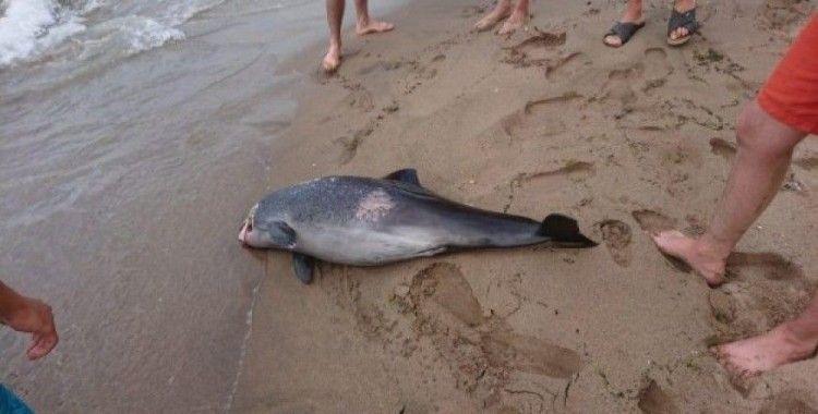 İnkumu'nda ölü yunus sahile vurdu
