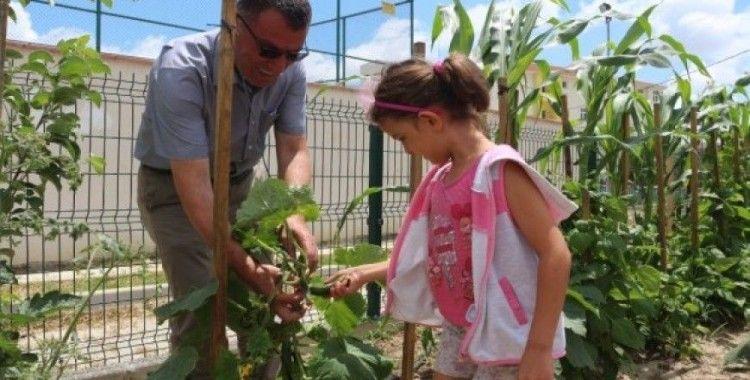 (Özel) Bu bahçenin ürünlerini öğrenciler yetiştiriyor