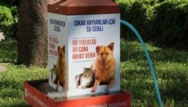 Büyükşehir'den sokak hayvanları uyarısı