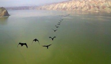 Kuş cennetinden eşsiz görüntüler