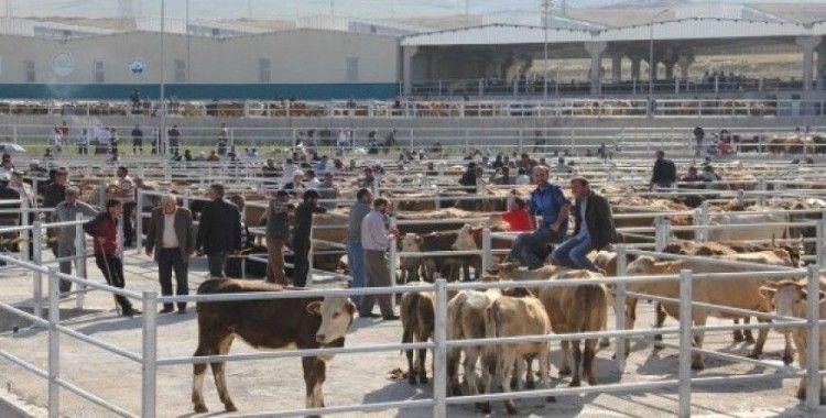 Hayvan üreticilerine müjde