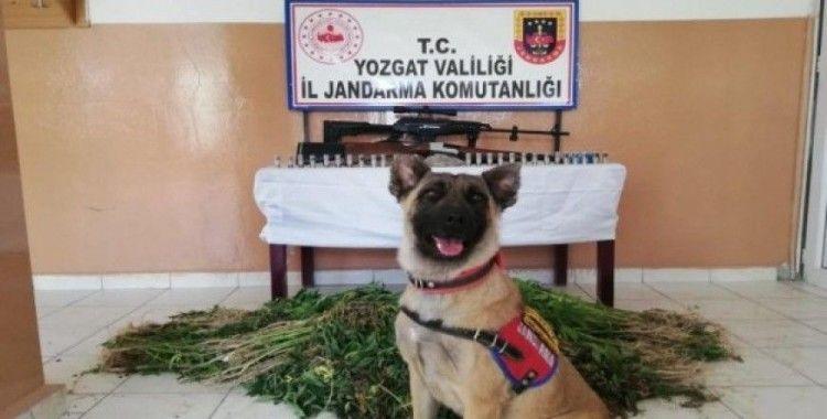 Yozgat'ta uyuşturucu operasyonu 3 gözaltı