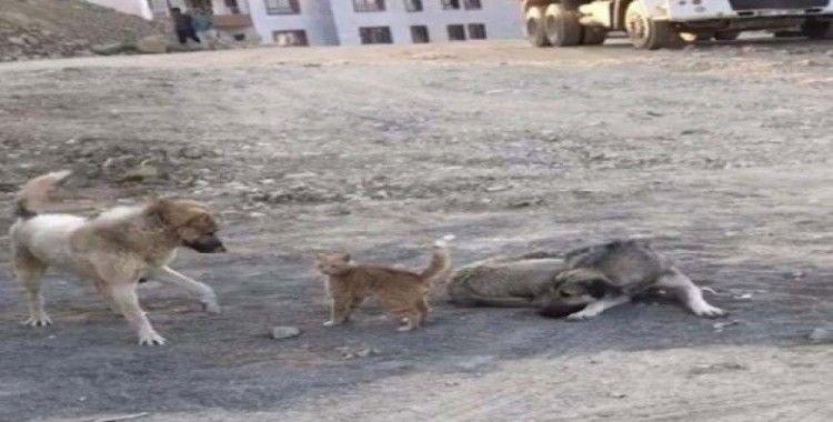 Köpek ile kedinin oynaması kameraya yansıdı