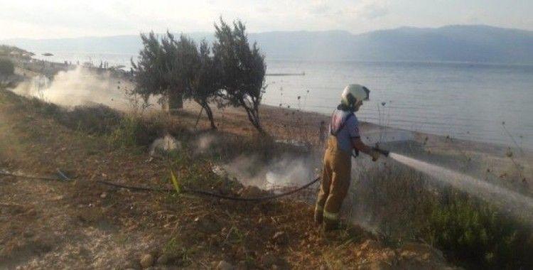 Burhaniye'de ot yangını ağaçlara zarar verdi