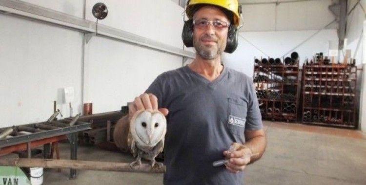 İşçiler buldukları yavru baykuşa sahip çıktı