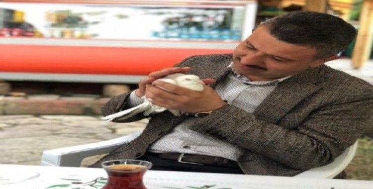 Ankara'dan kaçan güvercini Boyabat'ta belediye başkanı buldu
