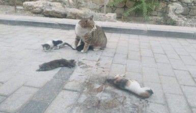 Anne kedi kazada ölen yavrularının başında ayrılmadı