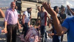 Göztepe'de kaçak kurban kesimi yapanlara zabıta müdahalesi
