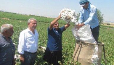 Araban Ovası'nda pamuk hasadına başlandı