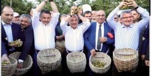 'Fındığın Başkenti' sloganı tartışmaya yol açtı