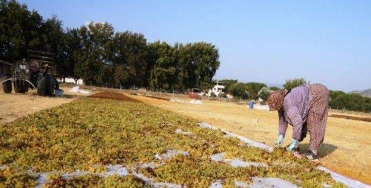 Kuru üzüm fiyatına müdahale, üreticiyi sevindirdi