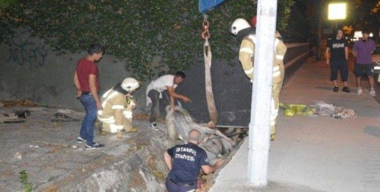 Sarıyer'de su kanalına düşen at itfaiye ekiplerinin çalışmasıyla kurtarıldı