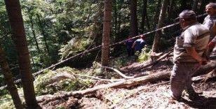 Üzerine ağaç devrilen şahıs hayatını kaybetti