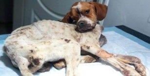 (Özel) Hasta köpeği tedavi etmek için 450 kilometre yol gittiler
