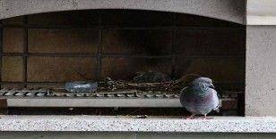 Terasına yuva yapan kuş için tadilata ara verdi