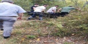 Ceviz ağacından düşen yaşlı kadın hayatını kaybetti