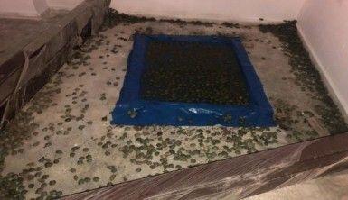 Sarp Gümrük Kapısında 2 bin 500 su kaplumbağası ele geçirildi