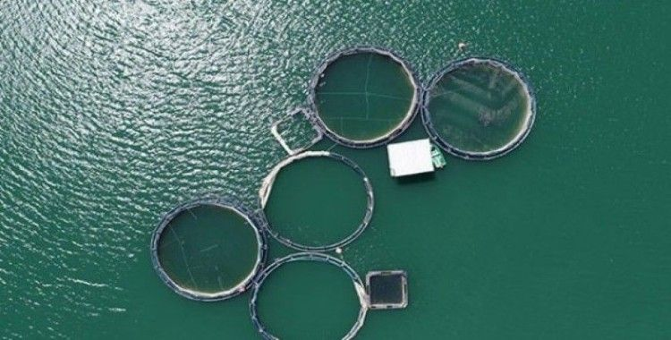 Tercan Baraj Gölünde yıllık 349 ton Alabalık üretiyor