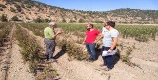 Aksu'da tuzak kontrolleri, Akseki'de küpeleme ve suni tohumlama yapıldı