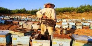 Arılar dünyasında savaş başladı