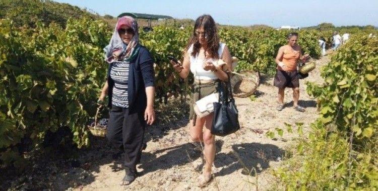 (Özel) Bozcaada'da sepetini al, üzümünü kendin kes turizmi