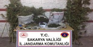 Sakarya'da jandarma operasyonunda 25 kilo esrar ele geçirildi: 3 gözaltı